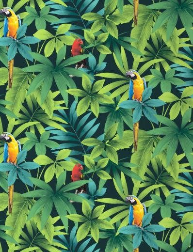 Tropical - Rainforest - Birds - Parrots - Macaw ...